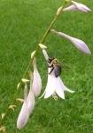 beeonflower1.jpg