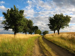 CORE Path